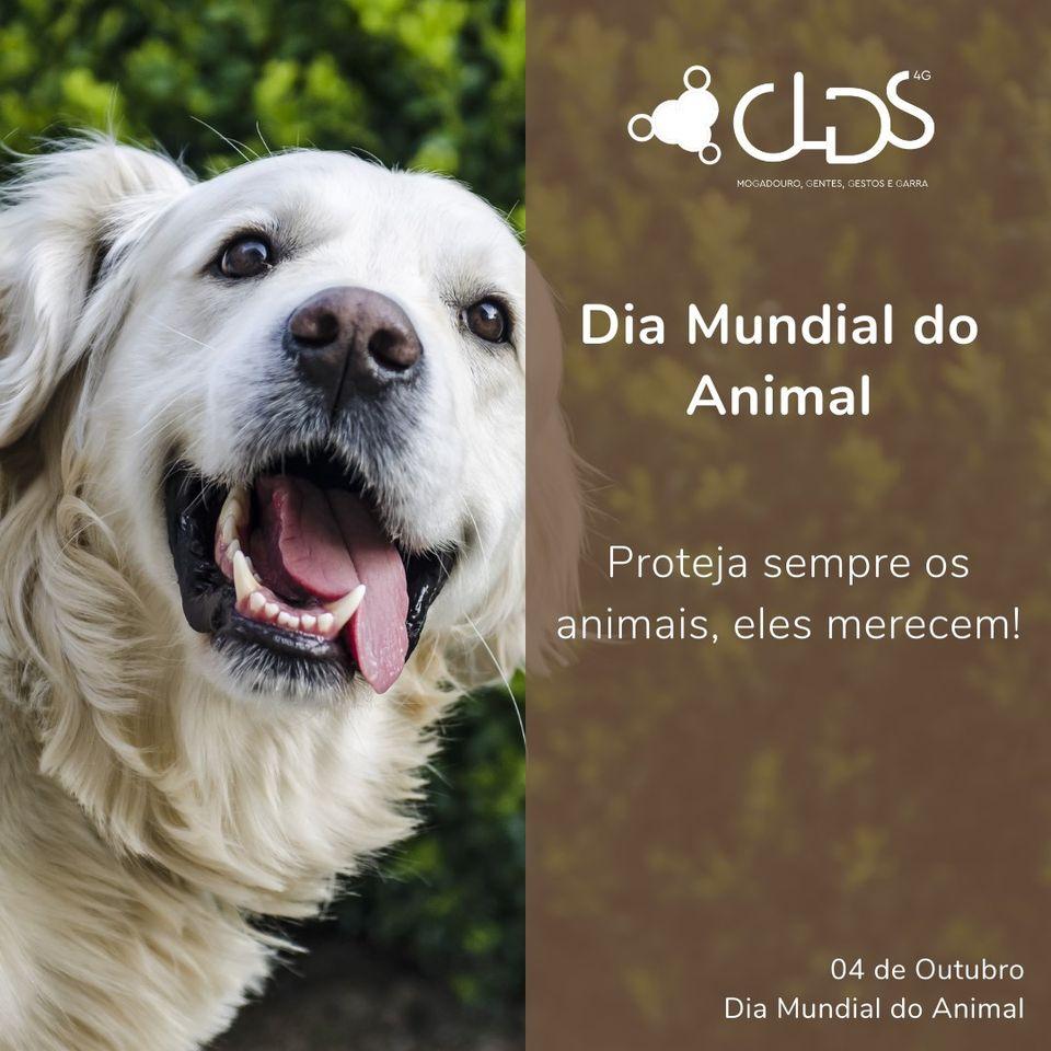 dia mundial do animal clds